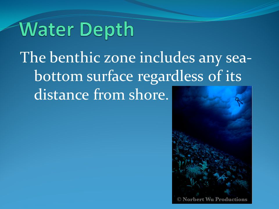 Water Depth The benthic zone includes any sea-bottom surface regardless of its distance from shore.