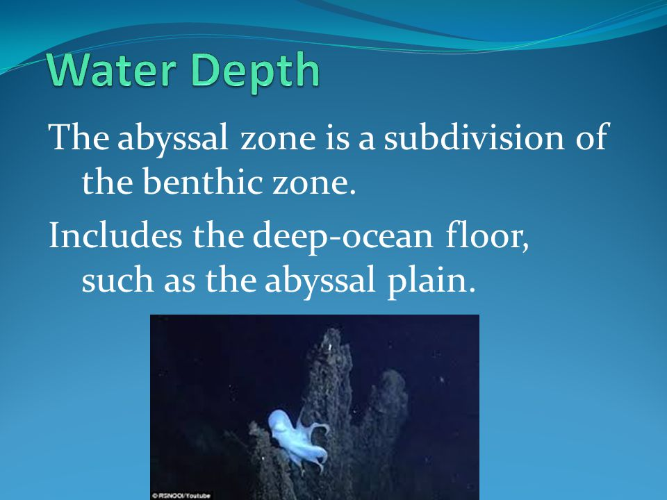 Water Depth The abyssal zone is a subdivision of the benthic zone.
