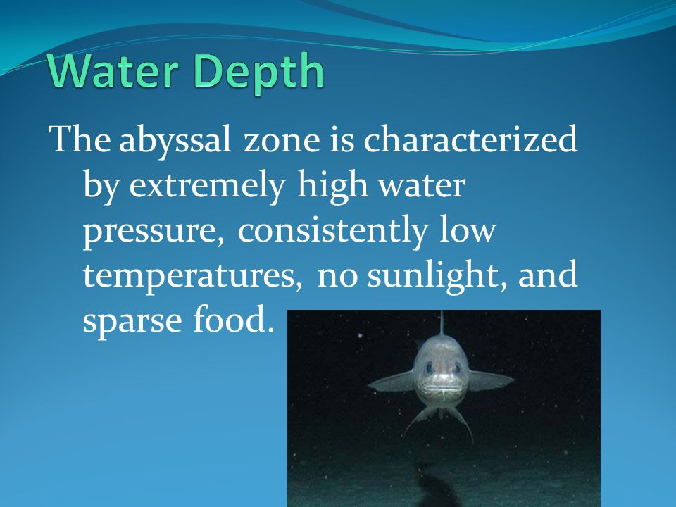 Water Depth The abyssal zone is characterized by extremely high water pressure, consistently low temperatures, no sunlight, and sparse food.