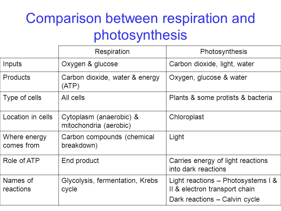 difference between photosynthesis and cellular respiration Plant physiology: photosynthesis, respiration, and transpiration photosynthesis a primary difference between plants and ingredient in photosynthesis and cell.