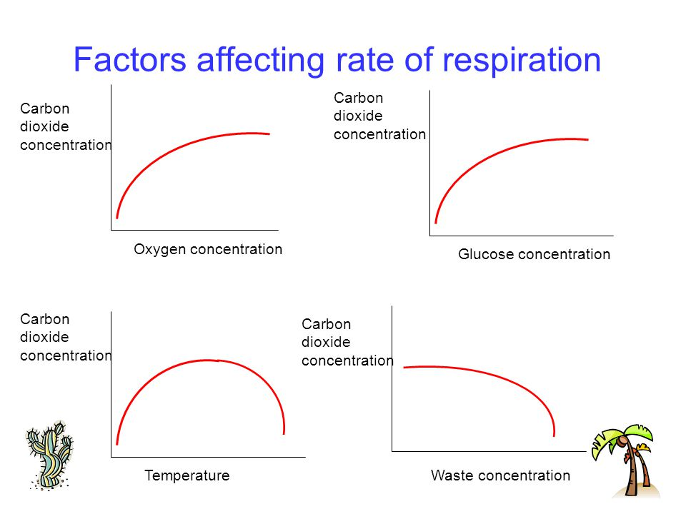 rate of cellular respiration biology essay Cellular photosynthesis and respiration essay sample photosythesis and cellular respiration are both processes in biology which transform energy in one form to another photosythesis is the process in which light energy is converted into chemical energy to produce glucose.
