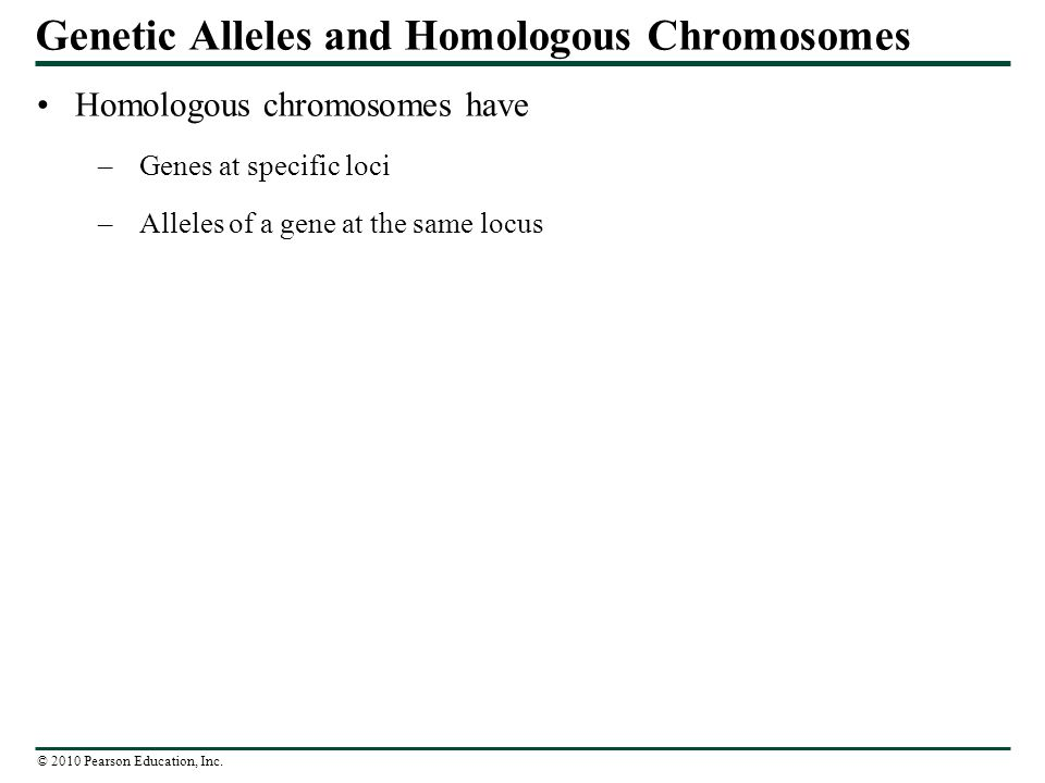 what is the relationship between alleles and homologous chromosomes