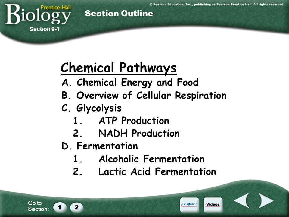 A. Chemical Energy and Food B. Overview of Cellular Respiration