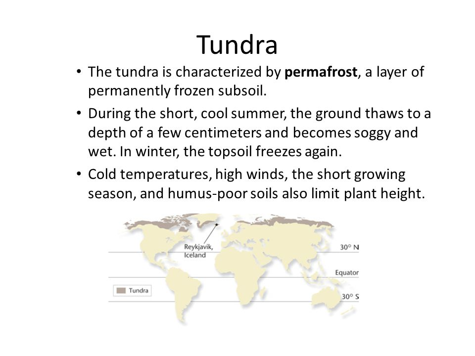 Tundra The tundra is characterized by permafrost, a layer of permanently frozen subsoil.