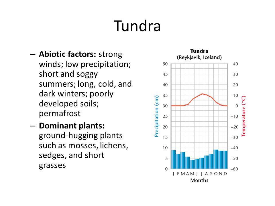 Tundra Abiotic factors: strong winds; low precipitation; short and soggy summers; long, cold, and dark winters; poorly developed soils; permafrost.