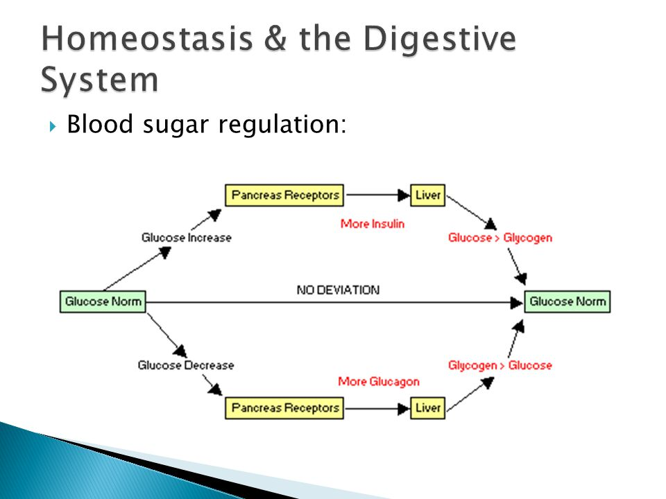an introduction to the homeostasis system Negative feedback systems explained homeostasis is the maintenance of a stable and constant internal environment in an organism homeostasis is crucial to the regulation of an internal environments and enables organisms to adapt to change, both internally and externally.