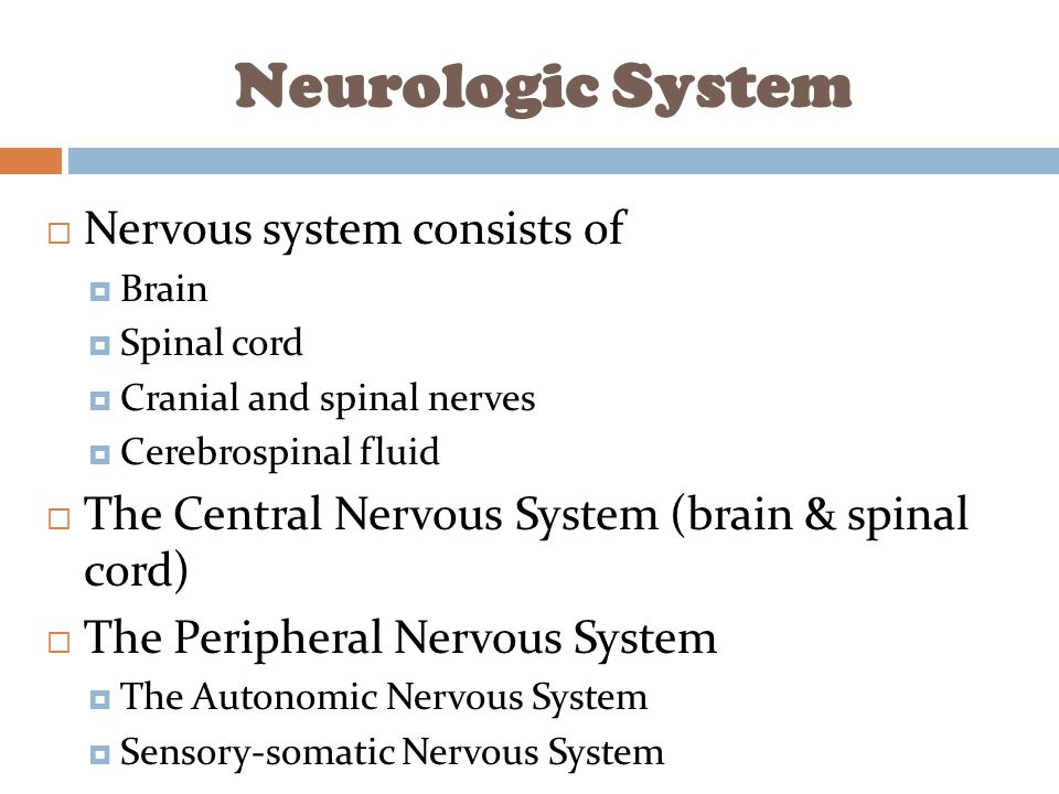 nerve system in hindi