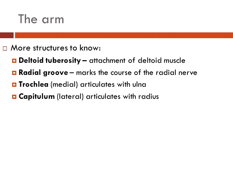 The arm More structures to know: