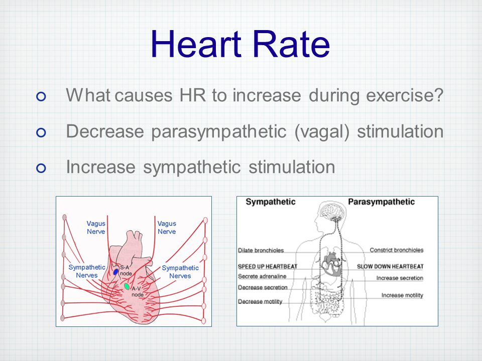 exercise 5 cardiovascular dynamics Free essay: review sheet exercise 6 cardiovascular physiology name: lab time/date: 1 define each of the following terms: • autorhymicity- the heart is exercise 5 cardiovascular dynamics o b j e c t i v e s 1 to understand the relationships among blood flow.