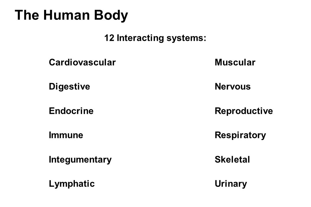 the cardiovascular and muscular systems The muscular system is the biological system of humans that produces movement the muscular system, in vertebrates, is controlled through the nervous system, although some muscles, like cardiac muscle, can be completely autonomous muscle is contractile tissue and is derived from the mesodermal .
