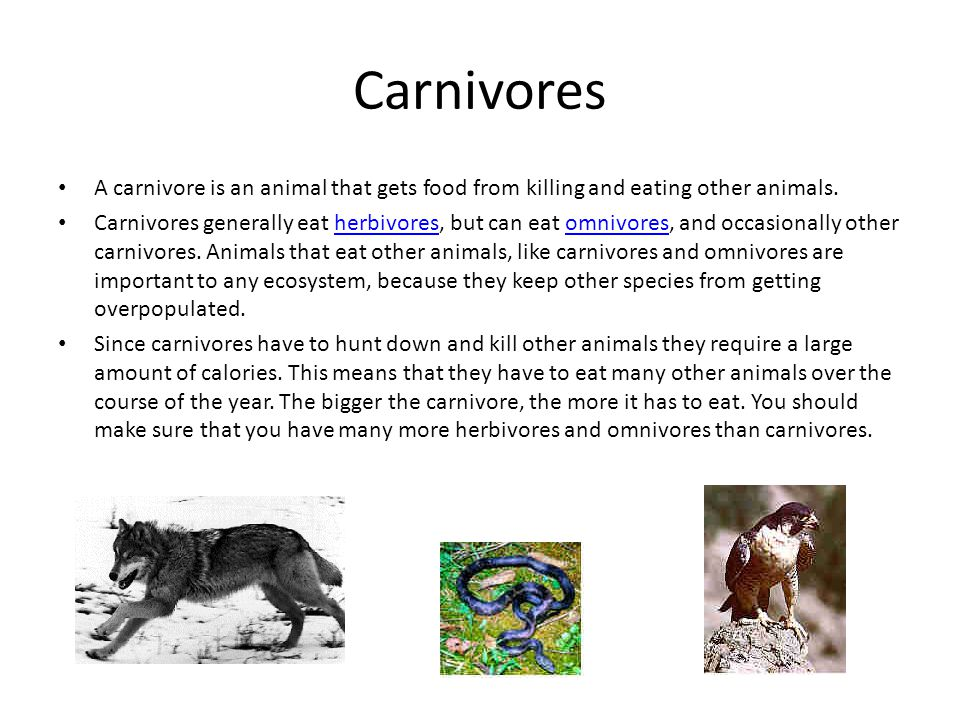 herbivore animals pdf file