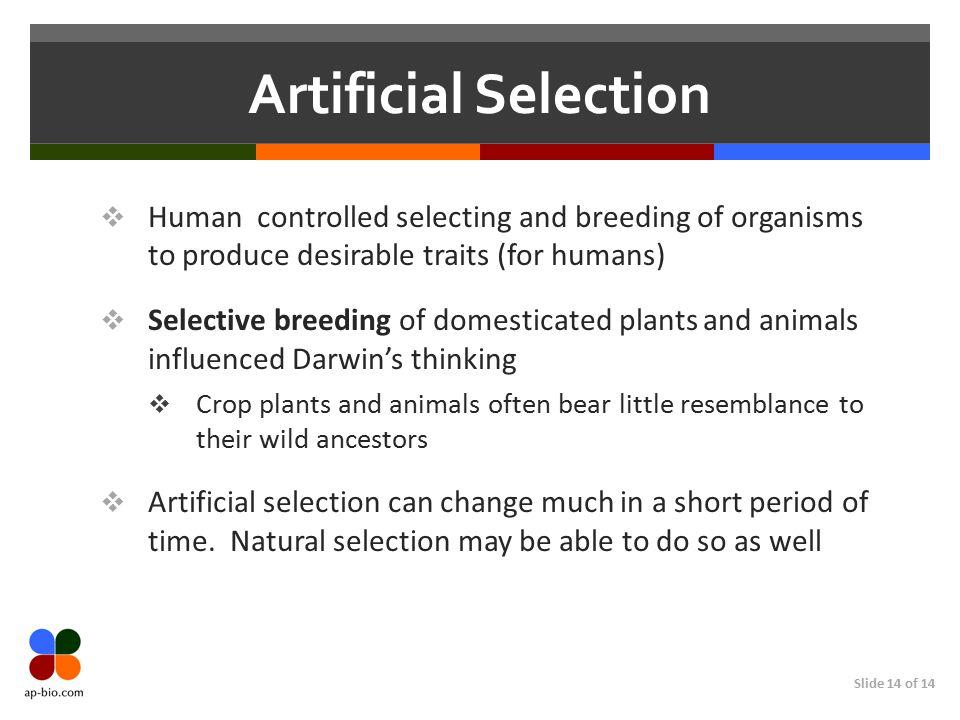 evolution evidence chapter 22 part 2 revised ap bio ppt download. Black Bedroom Furniture Sets. Home Design Ideas
