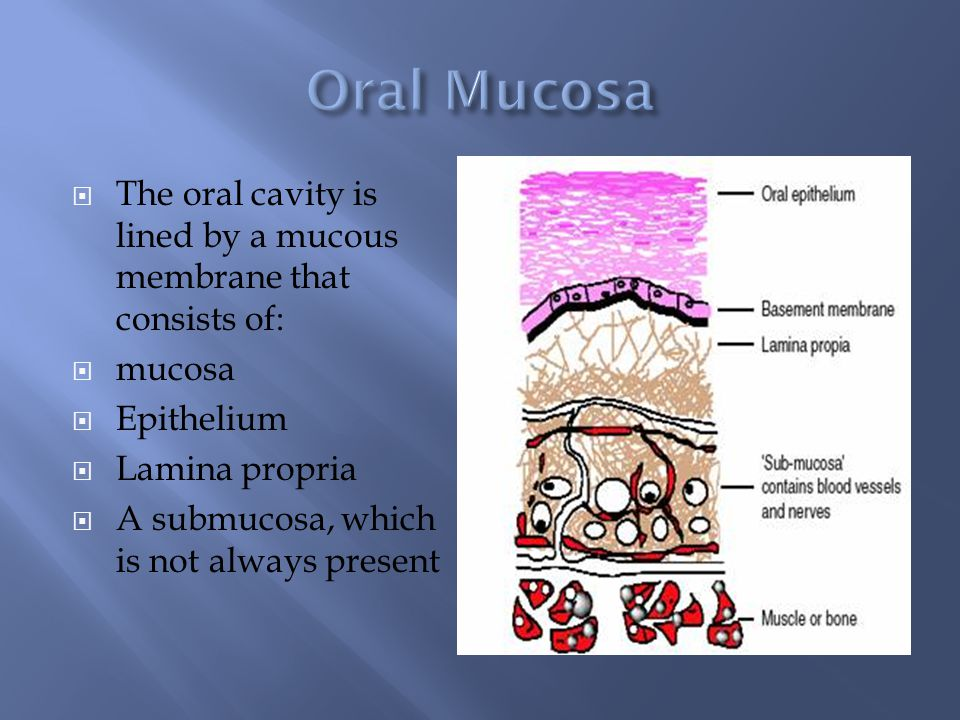 Her function of the oral cavity ass