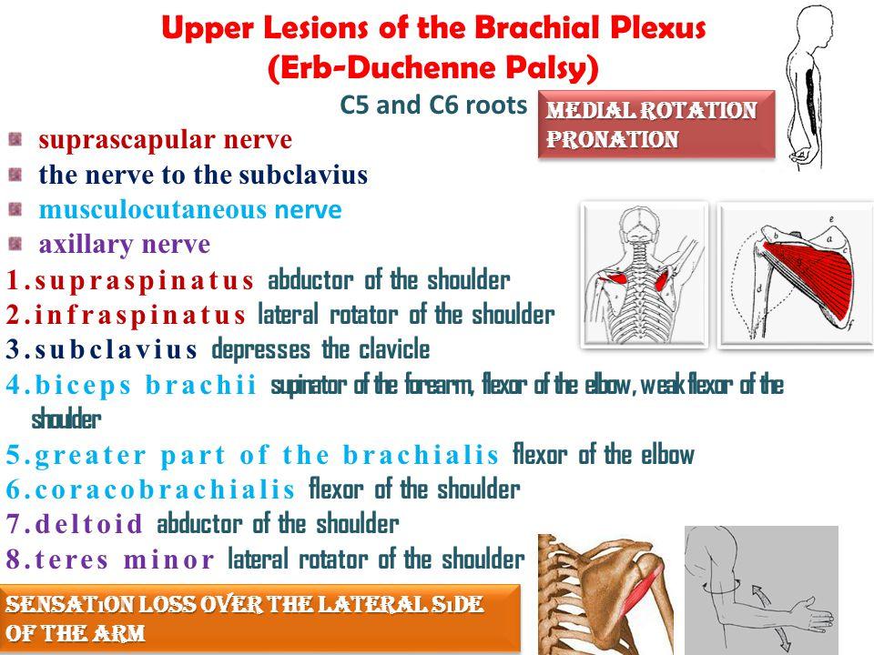 CASE ppt video online download Shoulder Flexion And Extension Hyperextension