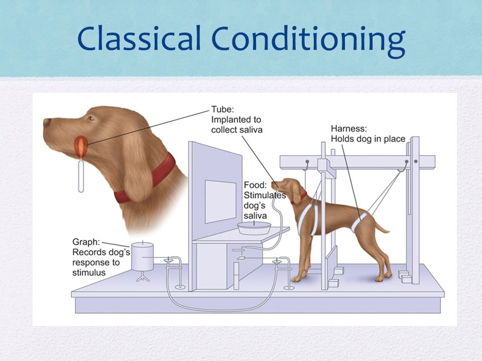 Classical Conditioning Cock Roach