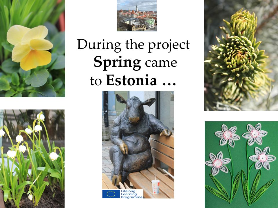 During the project Spring came to Estonia …
