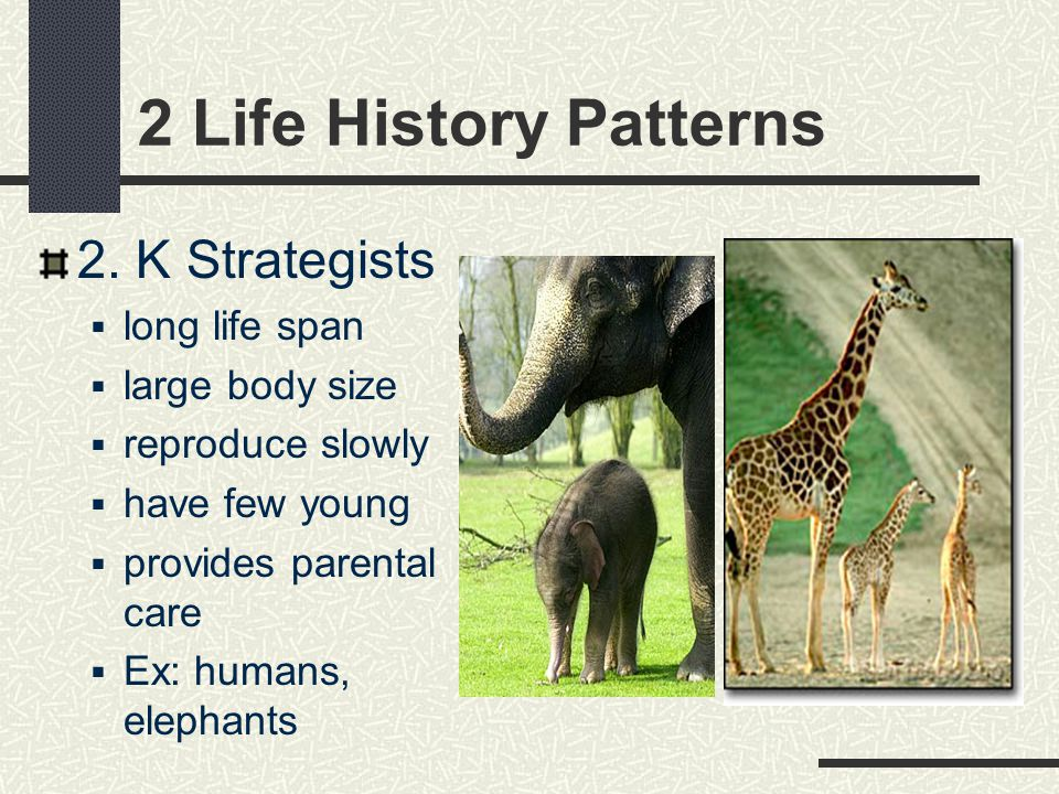 2 Life History Patterns 2. K Strategists long life span