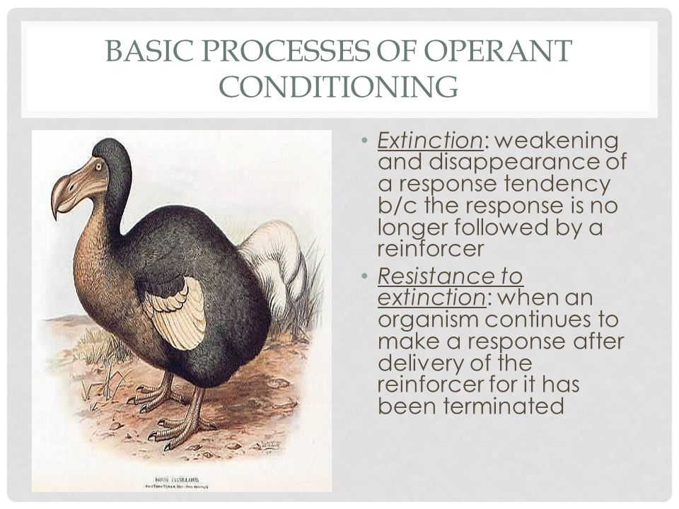 BASIC PROCESSES OF OPERANT CONDITIONING
