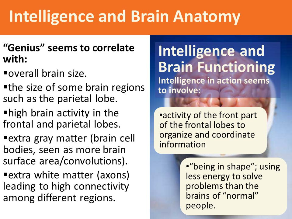 the correlation between head size or brain size and intelligent score Does a bigger brain make you the relationship between brain size and correlation between brain size and a person's score on an intelligence.