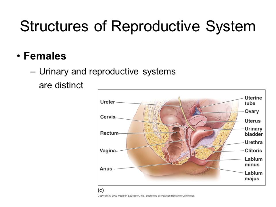 conclusion of reproductive system A healthy reproductive system is vital for optimal fertility and overall health both men and women need to be aware of the possible diseases of the.