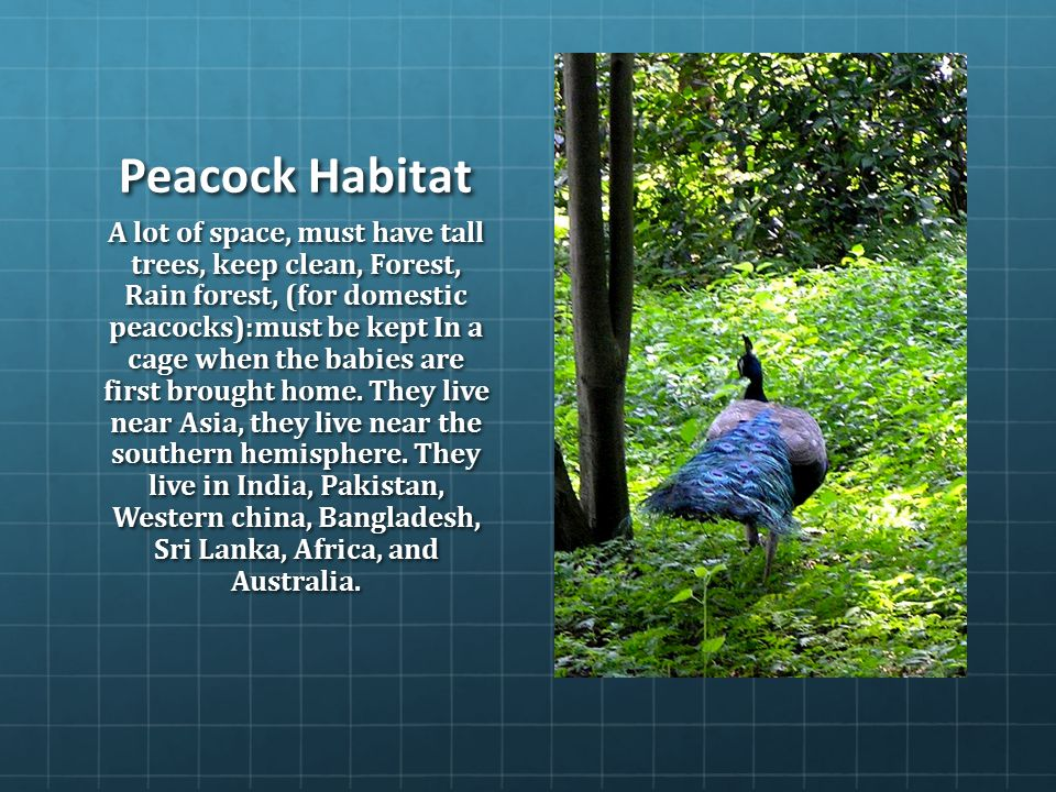 Home Decor India