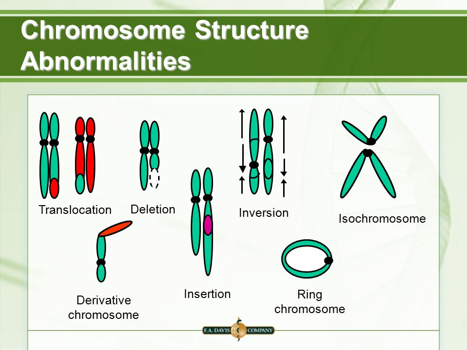 Chromosomal insertion