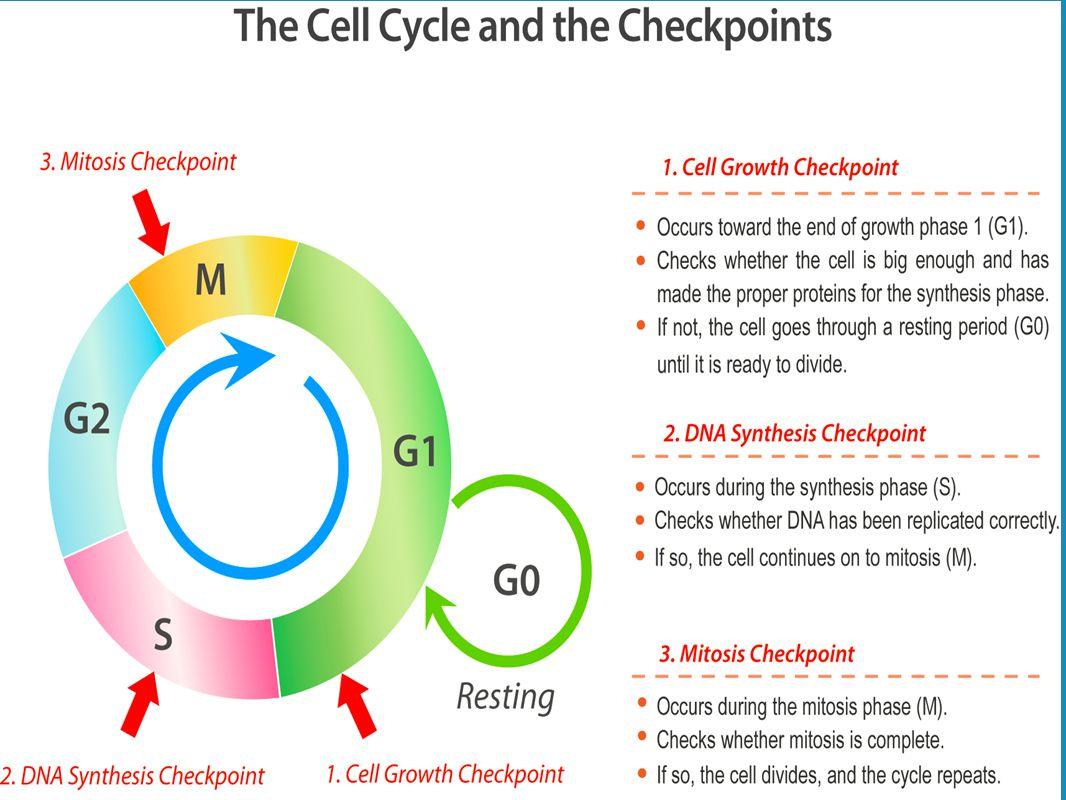 Cell worksheet