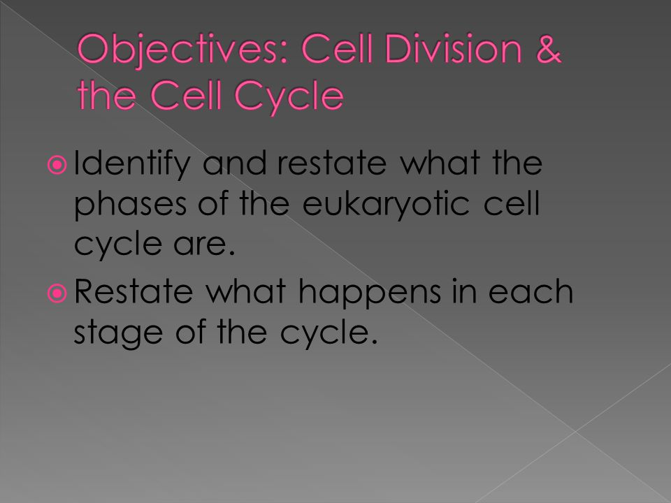Vocabulary Cell cycle Interphase Mitosis Cytokinesis Spindle - ppt ...