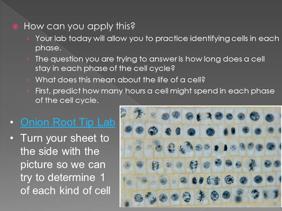 how to play cell lab