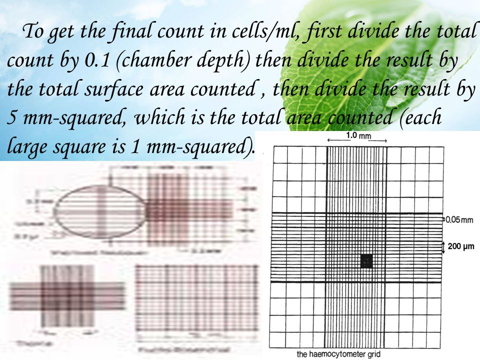 To get the final count in cells/ml, first divide the total count by 0