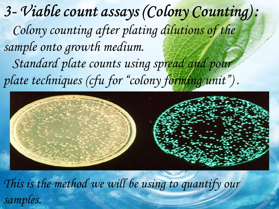 3- Viable count assays (Colony Counting) :