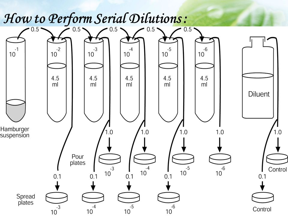 How to Perform Serial Dilutions :