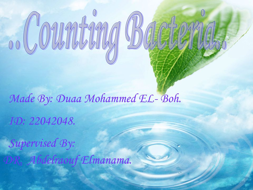 ..Counting Bacteria.. Made By: Duaa Mohammed EL- Boh. ID:
