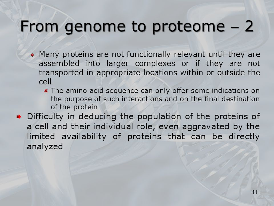 From genome to proteome  2