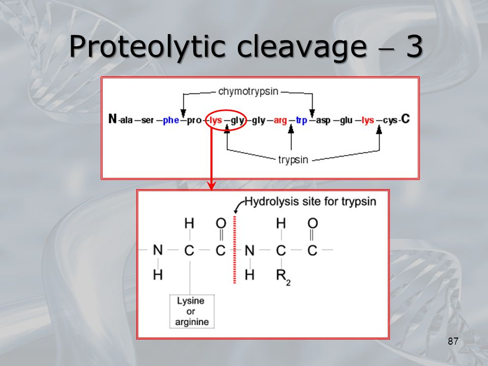 Proteolytic cleavage  3