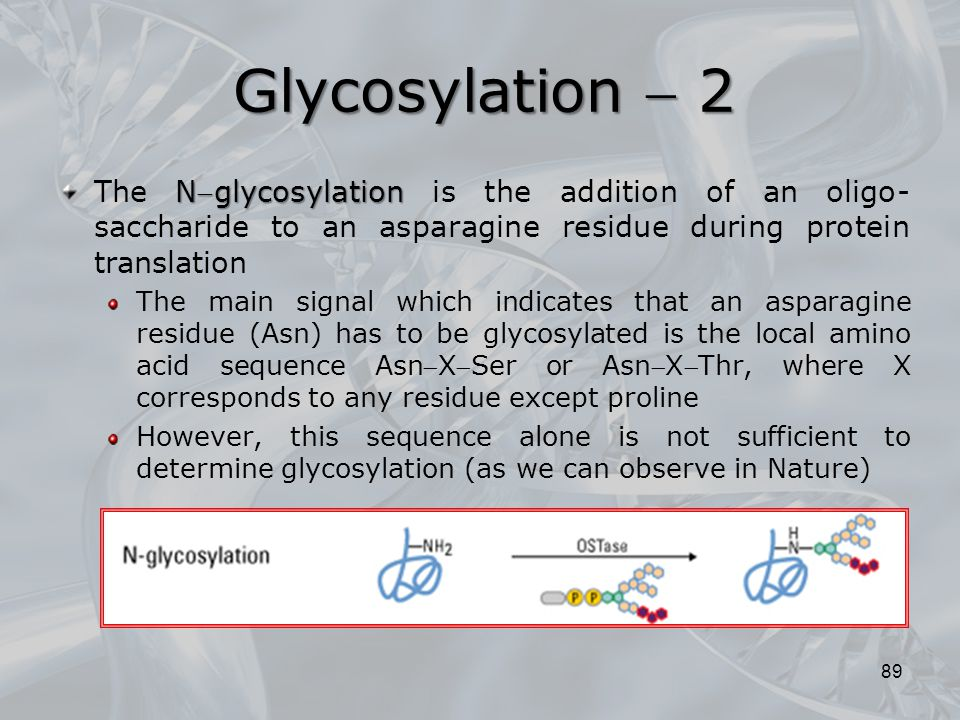 Glycosylation  2 The Nglycosylation is the addition of an oligo-saccharide to an asparagine residue during protein translation.