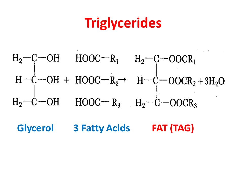 Triglycerides Glycerol 3 Fatty Acids FAT (TAG)