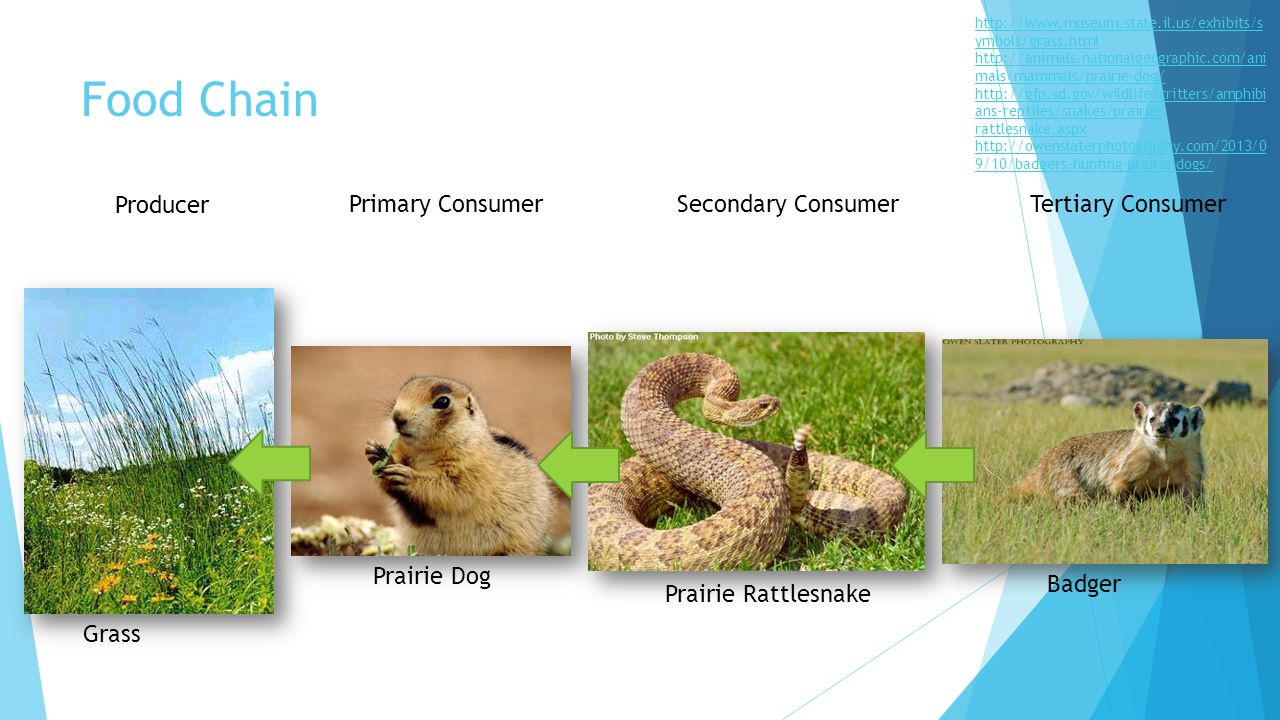 Food Chain For Grassland Biome - Best Chain 2018 Grassland Secondary Consumers