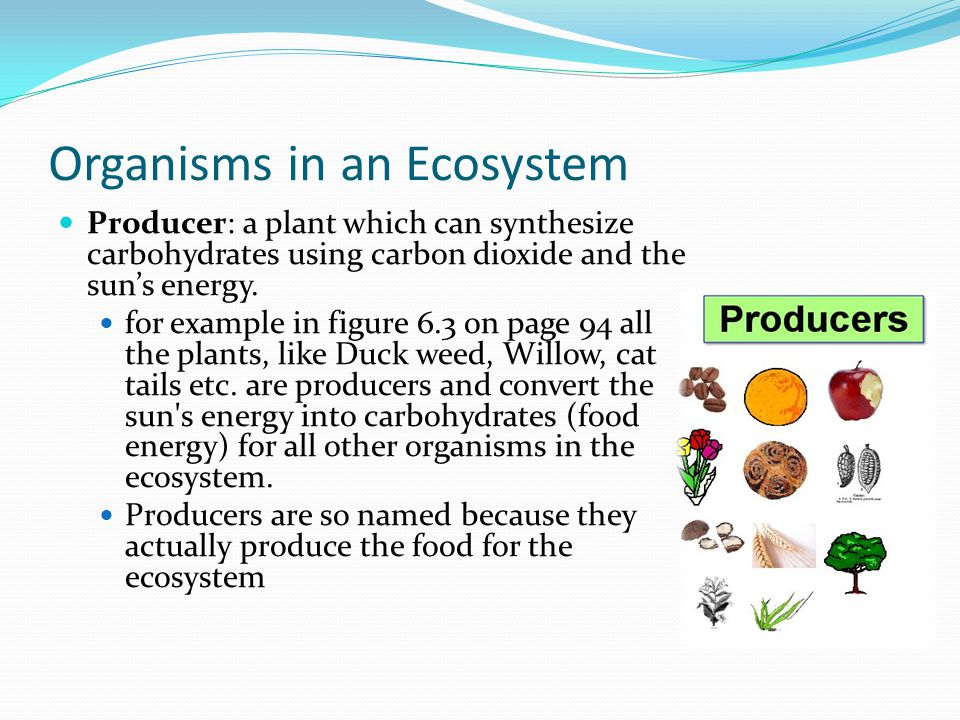 carbon dioxide in organisms and ecosystems essay Ecosystems are defined by a complex suite of interactions among organisms and   in addition, the exchange of carbon dioxide and other climatically relevant.