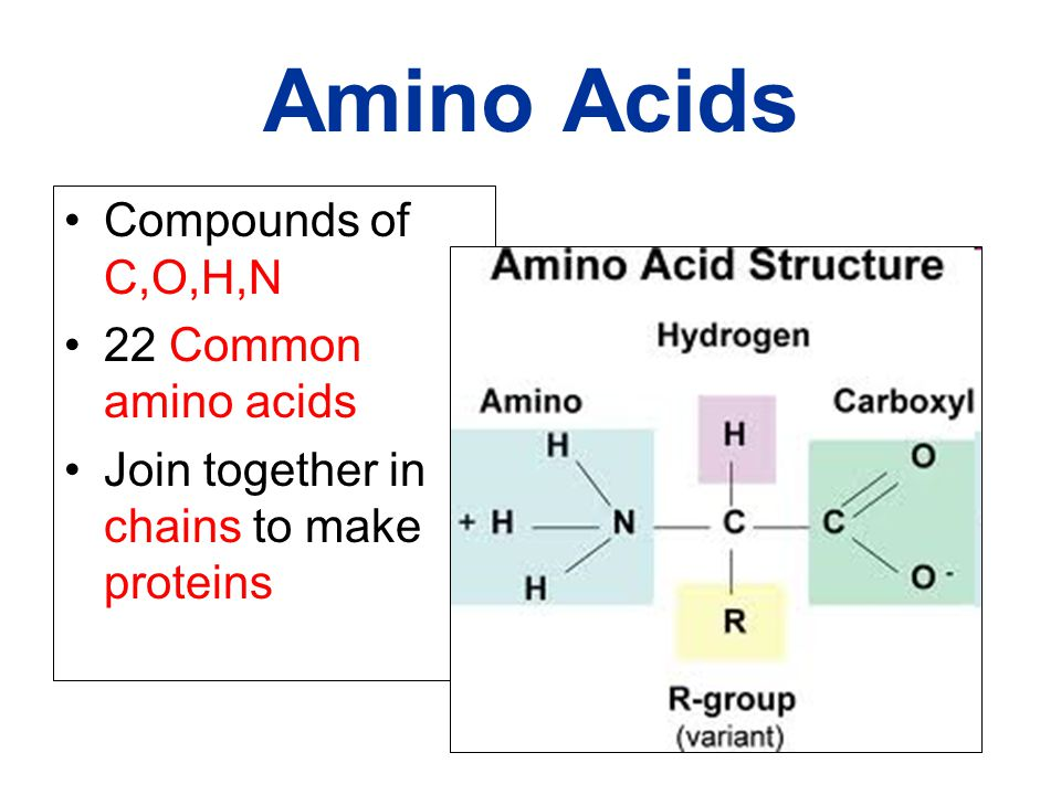 Amino Acids Compounds of C,O,H,N 22 Common amino acids