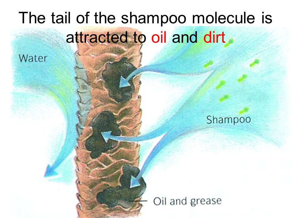 The tail of the shampoo molecule is attracted to oil and dirt