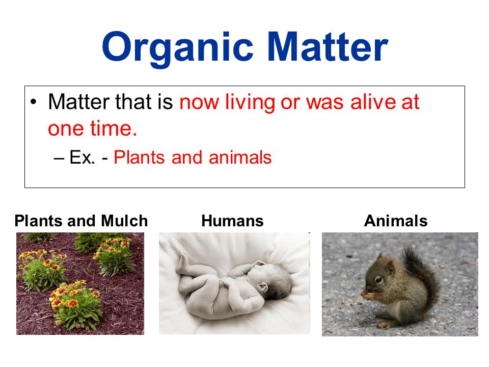 Organic Matter Matter that is now living or was alive at one time.