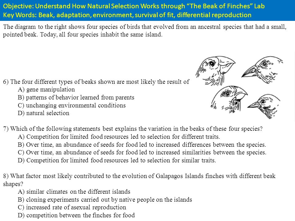 Differential Reproduction Rate In Natural Selection