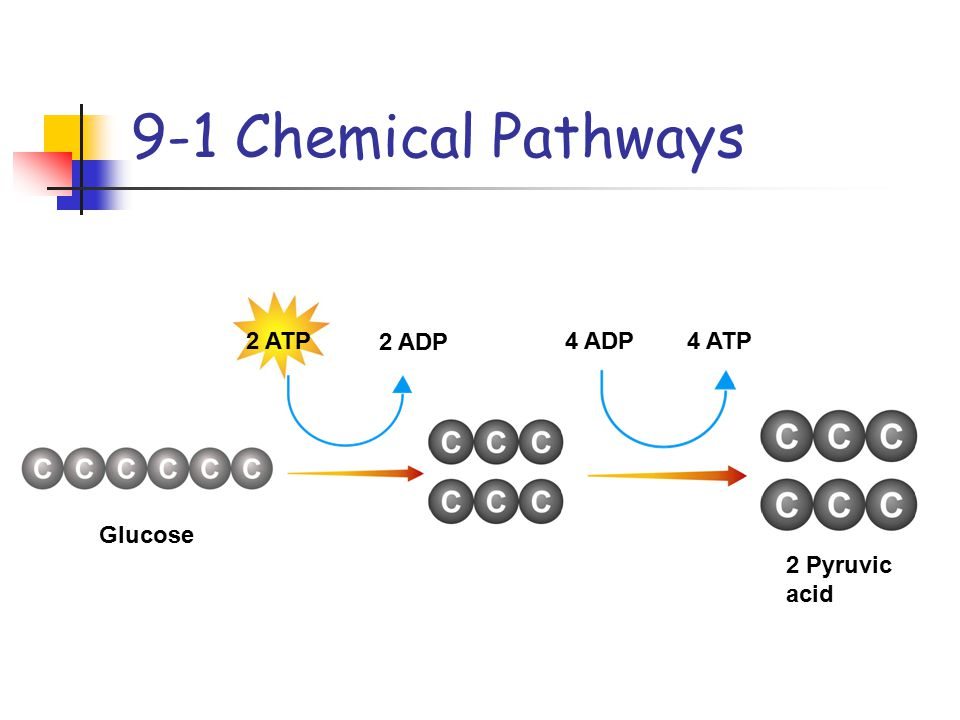 9-1 Chemical Pathways 2 ATP 2 ADP 4 ADP 4 ATP Glucose 2 Pyruvic acid