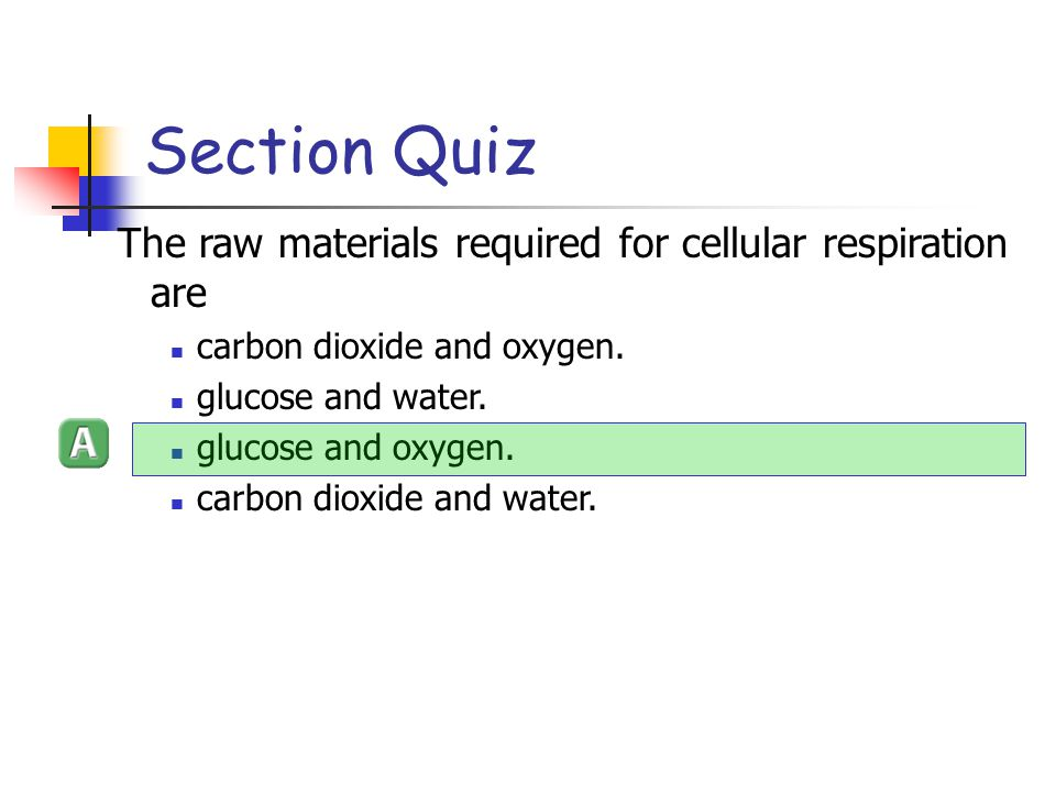 Section Quiz The raw materials required for cellular respiration are
