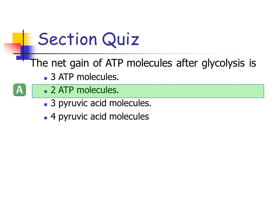 Section Quiz The net gain of ATP molecules after glycolysis is