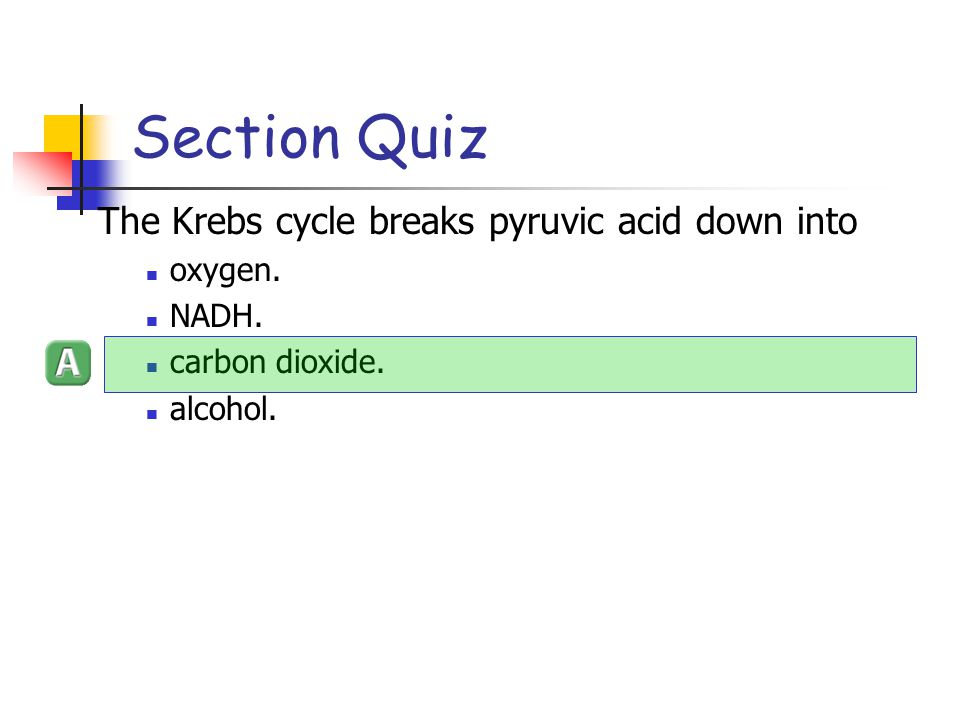 Section Quiz The Krebs cycle breaks pyruvic acid down into oxygen.