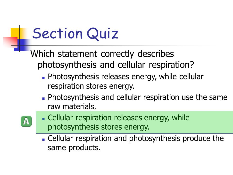 Section Quiz Which statement correctly describes photosynthesis and cellular respiration
