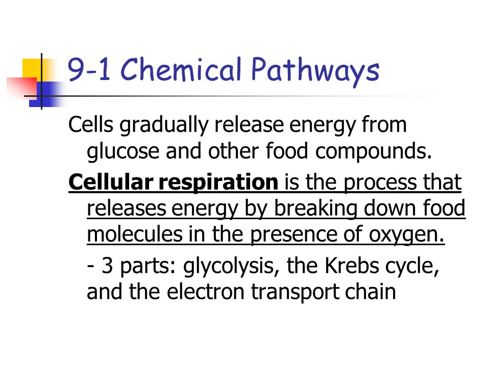 9-1 Chemical Pathways Cells gradually release energy from glucose and other food compounds.