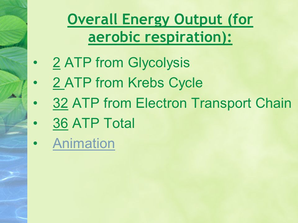 Overall Energy Output (for aerobic respiration):